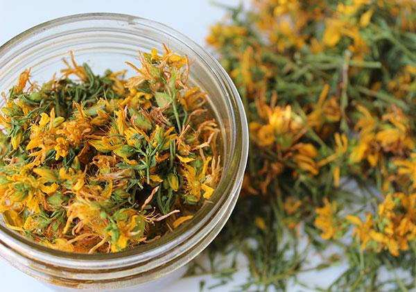 kantaron yağı kantaron bitkisi