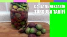 cagla-nektarin-tursusu